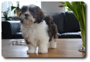 Sweety 6 maanden oud